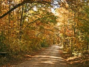 Farm Road In Jackson County, Ga